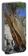 1n6956 Methuselah Tree Portable Battery Charger