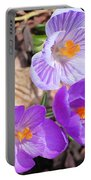 1st Flower In Garden 2010 Photo Portable Battery Charger
