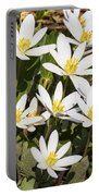 Bloodroot Flowers 2 Portable Battery Charger