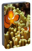 Clown Anemonefish Portable Battery Charger