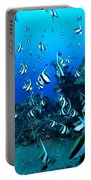 Hawaiian Reef Scene Portable Battery Charger