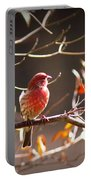 Img_0001 - House Finch Portable Battery Charger