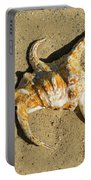Lambis Arthritica Spider Conch Portable Battery Charger