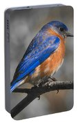 Male Eastern Bluebird Portable Battery Charger