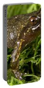 Mehu�n Green Frog Portable Battery Charger