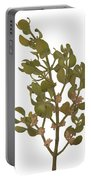 Pacific Mistletoe Portable Battery Charger