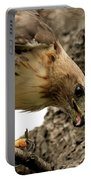 Red Tailed Hawk  Portable Battery Charger