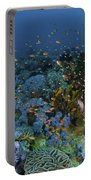 Reef Scene With Coral And Fish Portable Battery Charger by Mathieu Meur