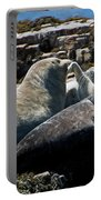 Sea Lions At Sea Lion Cove State Marine Conservation Area Portable Battery Charger