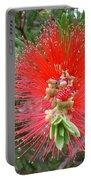 Australia - Callistemon Red Flower Portable Battery Charger