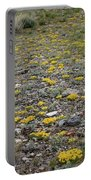 2d07512 Prairie Zinnia In Lost River Range Portable Battery Charger