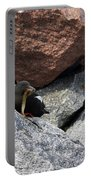 Black Guillemot Portable Battery Charger