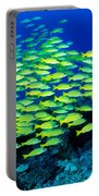 Bluestripe Snapper Portable Battery Charger