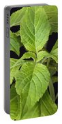 Diviners Sage Portable Battery Charger