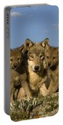 Gray Wolf And Cubs Portable Battery Charger