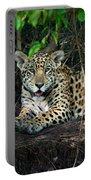 Jaguar Panthera Onca, Pantanal Portable Battery Charger