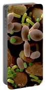 Microorganisms On Cabbage Portable Battery Charger