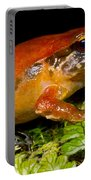 Rosy Ground Frog Portable Battery Charger