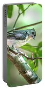 Tufted Titmouse In The Wilds Of South Carolina Portable Battery Charger