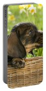 Wire-haired Dachshund Puppy Portable Battery Charger