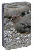 American Dipper Portable Battery Charger