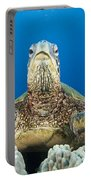 Hawaii, Green Sea Turtle Portable Battery Charger