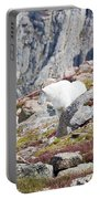 Mountain Goats On Mount Bierstadt In The Arapahoe National Fores Portable Battery Charger