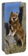 Finnish Lapphund Portable Battery Charger
