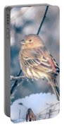 House Finch Tiny Bird Perched On A Tree Portable Battery Charger