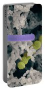 Lactic Acid Bacteria Portable Battery Charger