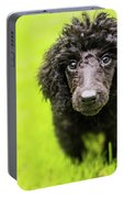 Poodle Puppy Portable Battery Charger