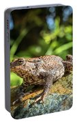 Amphibian, Common British Toad / Frog Portable Battery Charger