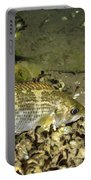 Rock Bass Portable Battery Charger