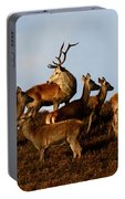 Red Deer In The Highlands Portable Battery Charger