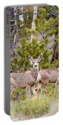 Mule Deer In The Pike National Forest Of Colorado Portable Battery Charger