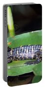 A Baby Alligator Resting On A Lilly Pad Portable Battery Charger