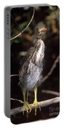 A Baby Green Heron Stretched Out Peering Into The Camera Portable Battery Charger