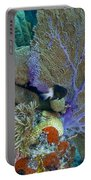 A Bi-color Damselfish Amongst The Coral Portable Battery Charger