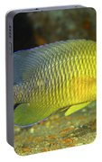 A Dusky Damselfish Offshore From Panama Portable Battery Charger