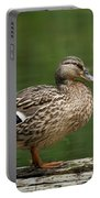 A Female Mallard Standing On A Piece Of Wood Portable Battery Charger