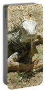 A Glaring Common Iguana On Aruba's Wild Side Portable Battery Charger