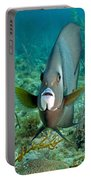 A Gray Angelfish In The Shallow Waters Portable Battery Charger by Michael Wood