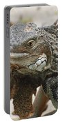A Gray Iguana With Spines Along It's Back Portable Battery Charger