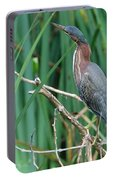 A Green Heron By The Canal Portable Battery Charger