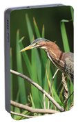 A Green Heron Stalks Prey Portable Battery Charger