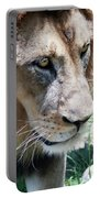 A Male Lion, Panthera Leo, King Of Beasts Portable Battery Charger