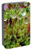 A Microcosm Of The Forest Of Moss In Rain Droplets Portable Battery Charger