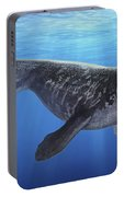 A Prognathodon Saturator Swimming Portable Battery Charger
