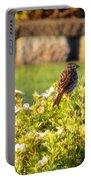 A Sparrow Surveys Portable Battery Charger