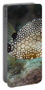 A Spotted Trunkfish, Key Largo, Florida Portable Battery Charger